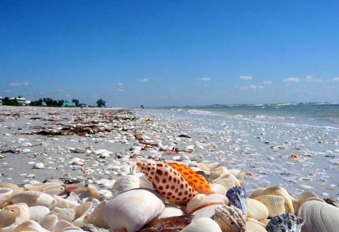 Остров Санибел известен своими пляжами и обилием диковинным морских ракушек.