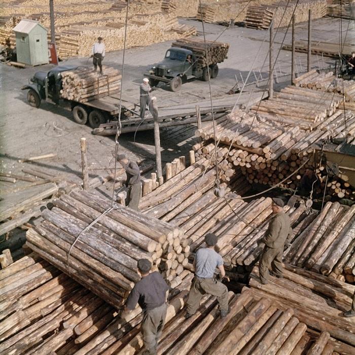 Рабочие контролируют процесс погрузки леса.