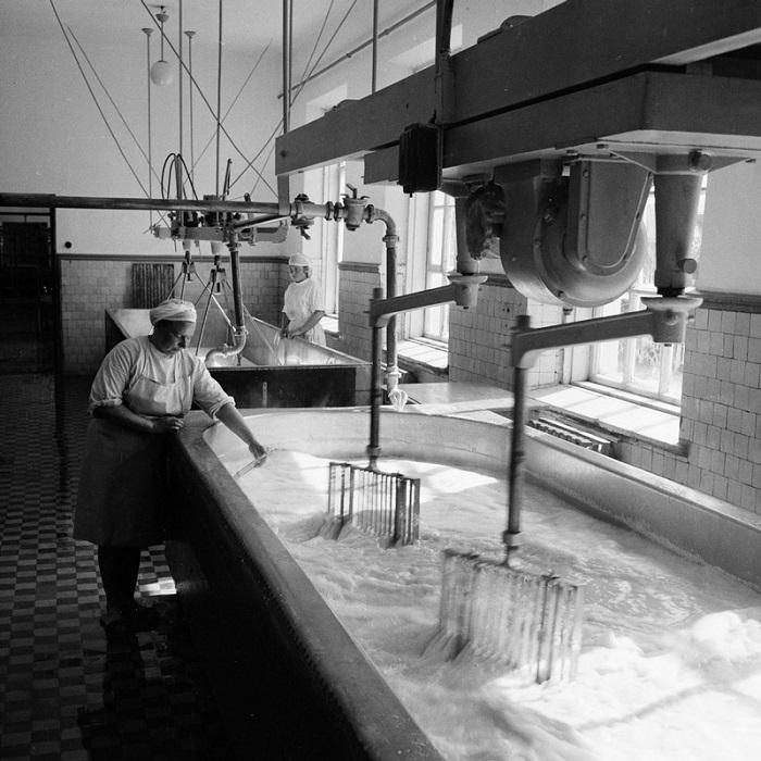 Женщины в цехе сыроваренного завода.