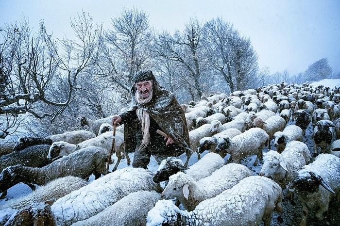 Старый пастух во время снежного шторма в иранской провинции Гилан.