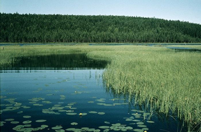 Чистая и прозрачная вода, изредка покрывается желтыми точками цветов.
