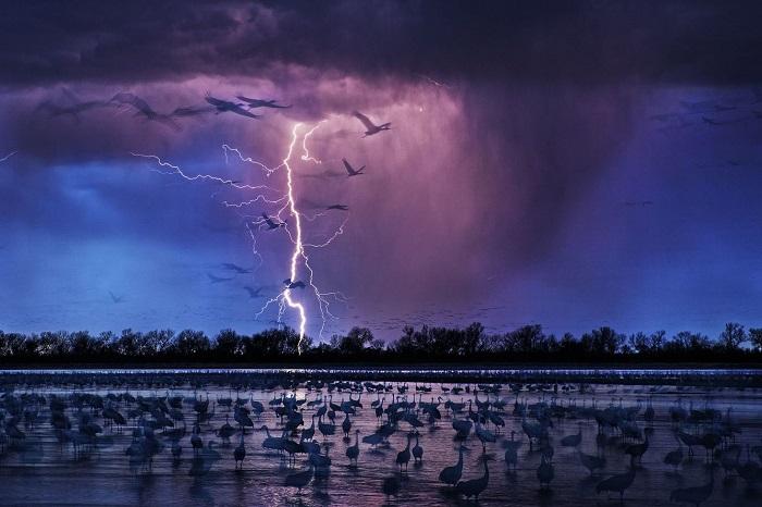 Победителем международного конкурса признан снимок фотографа Рэнди Олсона (Randy Olson).