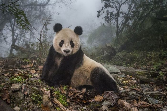 2-е место в категории «Животные в естественной среде обитания» присуждено американскому фотографу Ами Витале (Ami Vitale).
