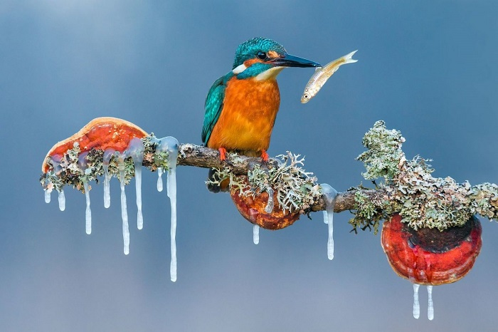 Особую отметку жюри в категории «Животные в естественной среде обитания» получил хорватский фотограф Петар Саболь (Petar Sabol).