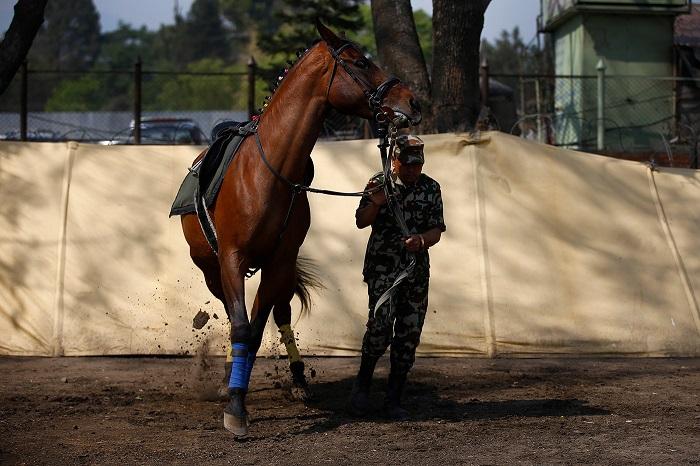 На празднике  лошади исполняют различные трюки и устраиваются скачки.