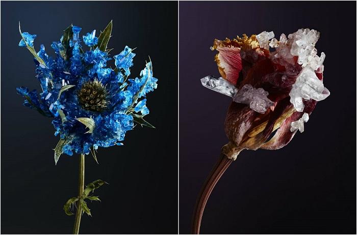 Ботанические скульптуры.