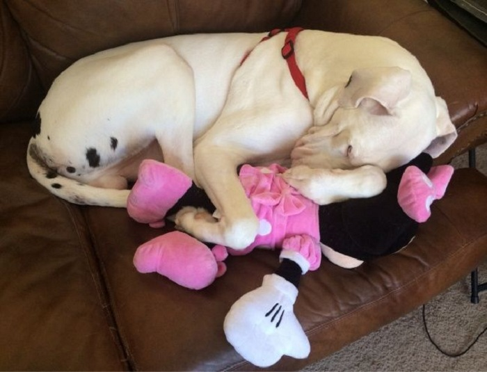 Сон с любимой игрушкой.