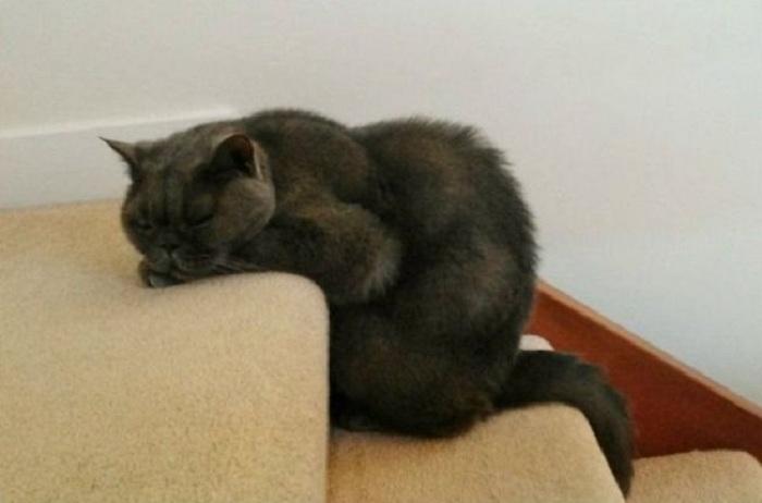 Кот выбился из сил.