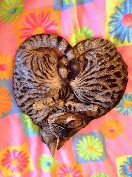 Кошачья любовь и преданность.