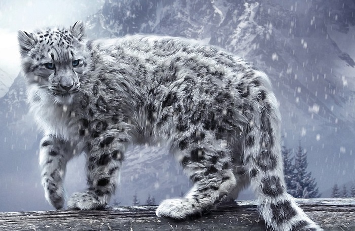 Крупное хищное млекопитающее.