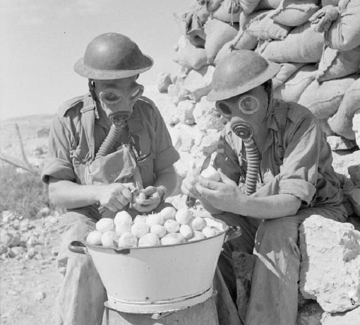 Британские солдаты чистят лук в противогазах. Тобрук. Итальянская Ливия. 15 октября 1941 года.