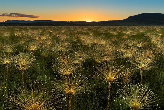 «Волшебный восход солнца». Автор фотографии: Марсело Портелла, Бразилия.
