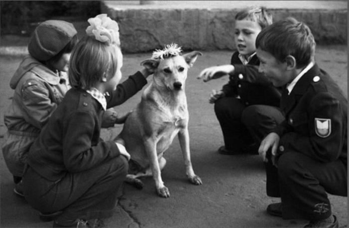 Дети пришли в школу и увидели собаку, которую решили одарить цветами.