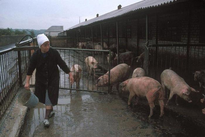 Донецкая ферма шахтеров, которая обеспечивает их едой, 1988 год. Фотограф Бруно Барби (Bruno Barbey).