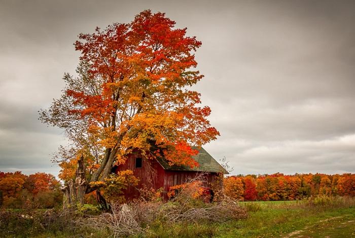 Старая избушка с засыхающим деревом.
