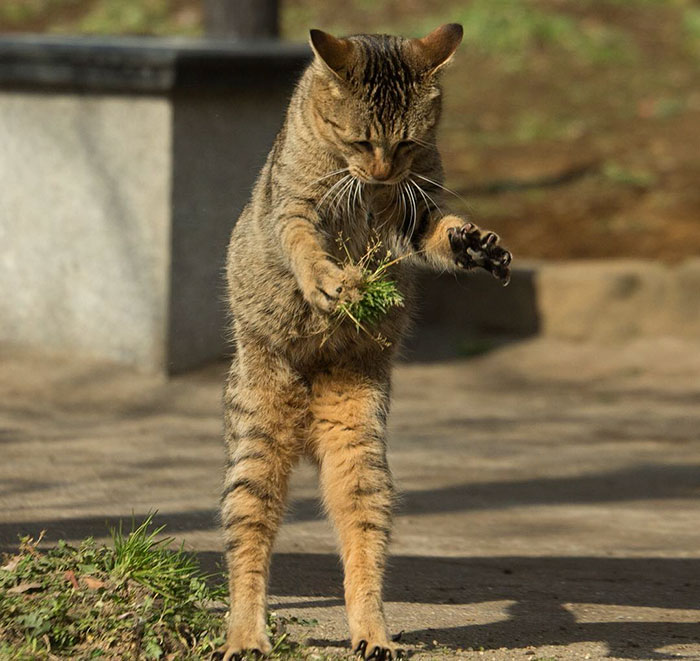 Кот-исследователь.