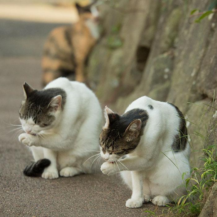 Утро начинается, кошки умываются...