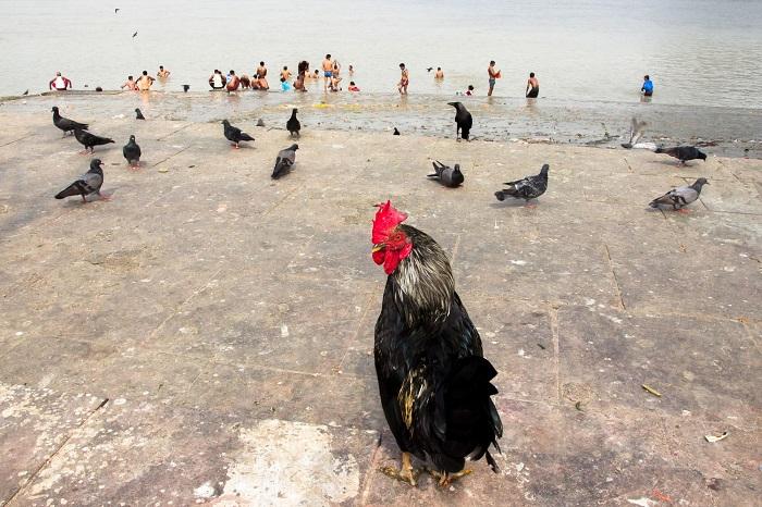 Место съемки - Моллик Гат, город Калькутта (Индия).