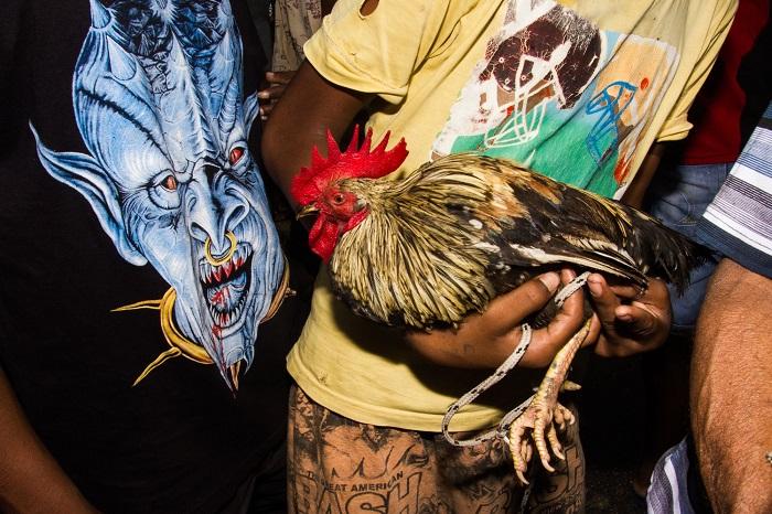 Городские животные на снимках уличного фотографа Энамула Кабира.