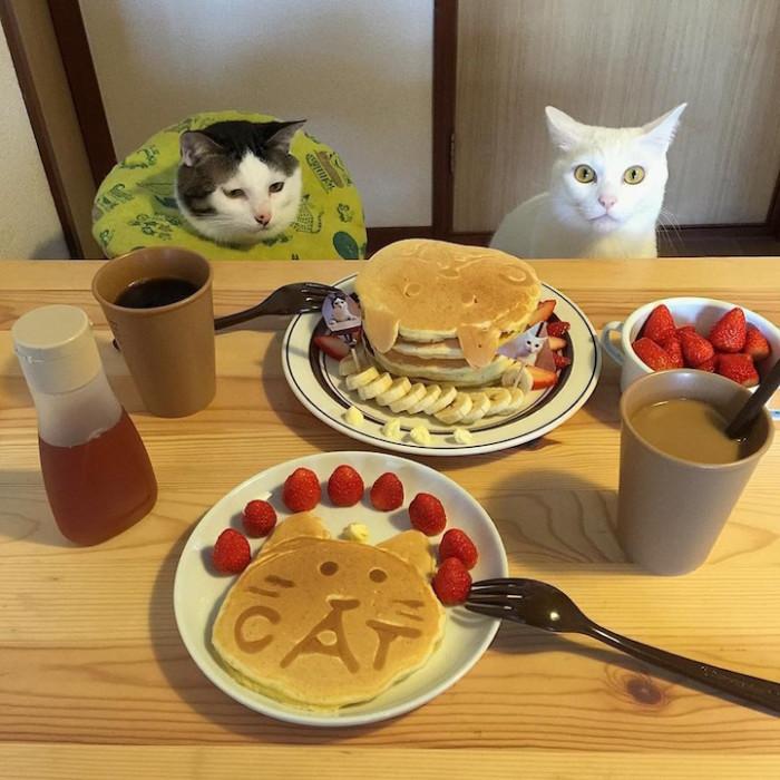 Вам то весело, а как нам кошек кушать?