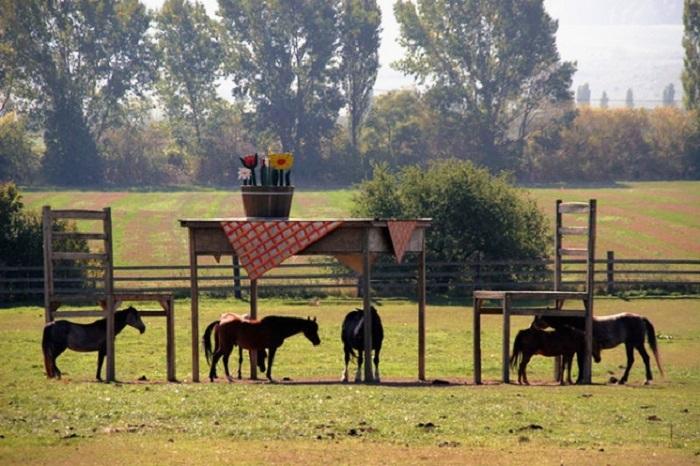 Фермеру запретили строить навес для лошадей на собственном поле по какой-то формальной причине, но мужчина не растерялся и построил деревянные стол и стулья, для которых разрешения не надо.
