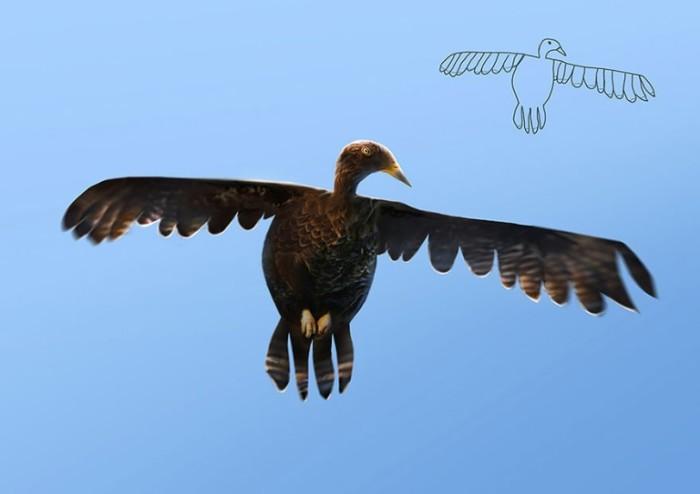 Орел парящий в небе — так ее себе представлял 4-летний Тельмо.