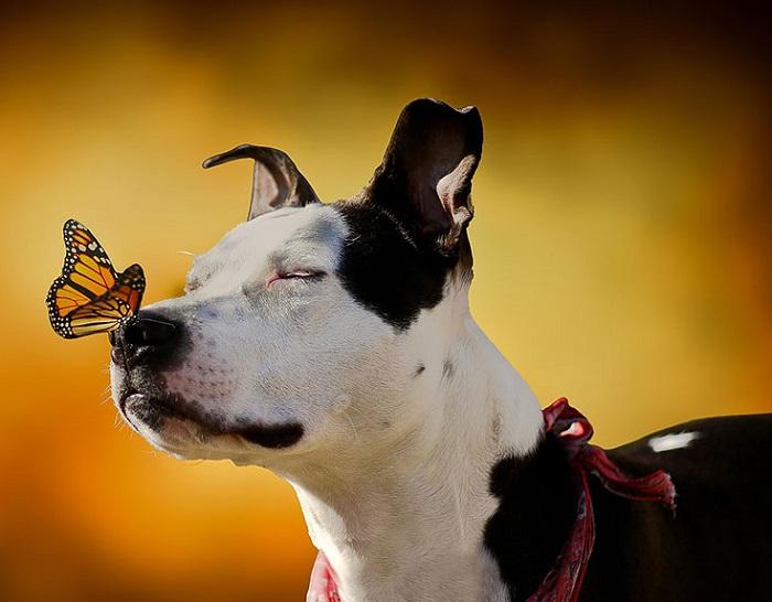 Пёс наслаждается поцелуем бабочки.