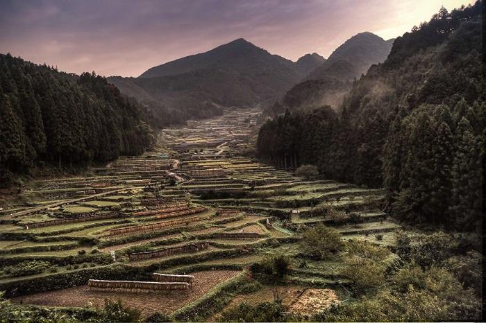 Это целое произведение искусства, и за отдельную плату туристов привозят полюбоваться вживую на рисовые поля.