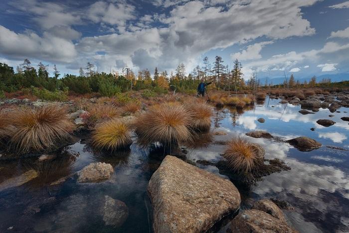 Пучки травы, растущей по берегам водоемов, и в самом деле напоминают гигантских «осенних» ежиков.