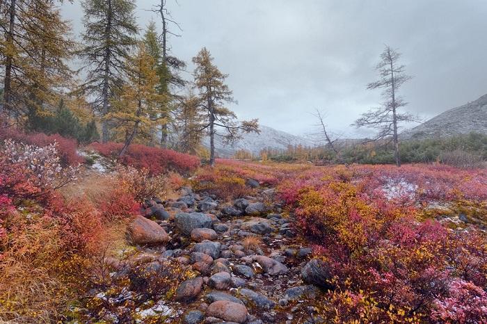Первый снег среди ярких красок осени.