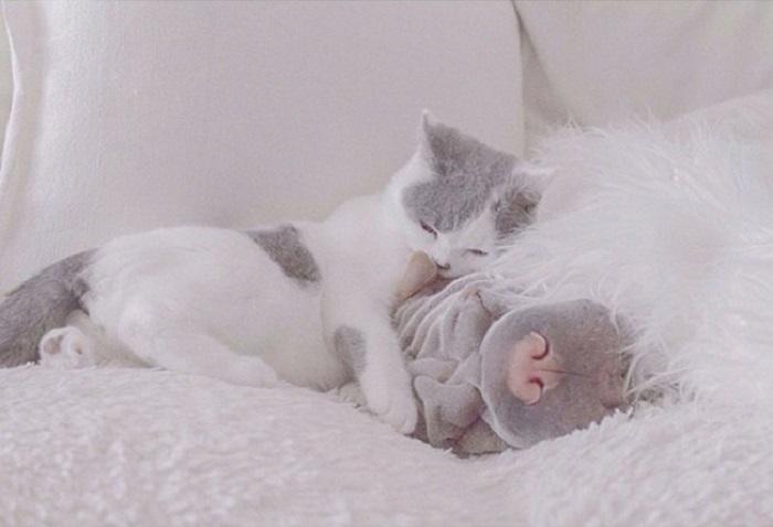Эта сладкая парочка живёт в Тасмании, на южном побережье Австралии. Шарпей по кличке Паддингтон и кот Батлер - неразлучные друзья, которые всегда рядом друг с другом.