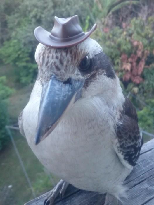 Парень полтора года прикармливал птичку ради этой фотки.