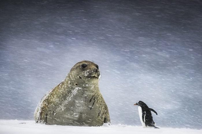 Вторым в номинации «Жарко/холодно (одиночный снимок)» признан британский фотограф Эндрю Джеймс (Andrew James), заснявший жителей Антарктиды.