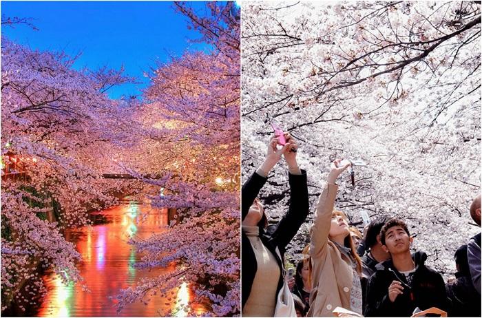 Один из древнейших обрядов японцев, который привлекает туристов со всего мира.
