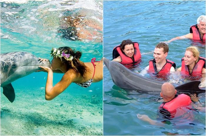 Поплавать с дельфином - одно из самых заветных желаний многих людей, но для животных содержание в крошечных бассейнах - страшное мучение.