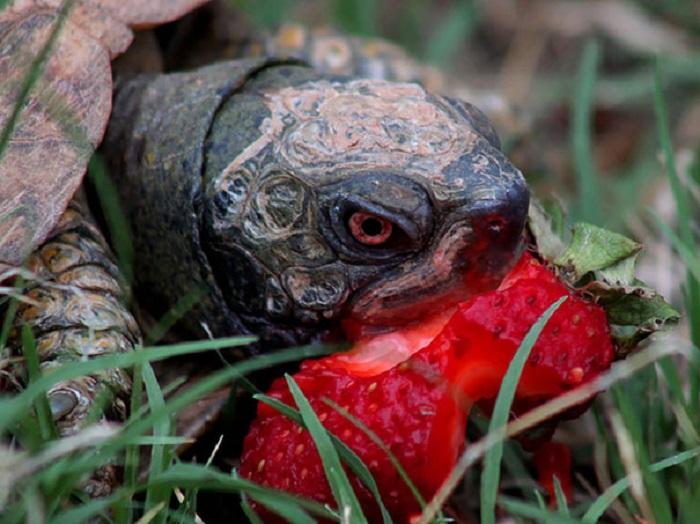 Стоять! Это только моя ягода!