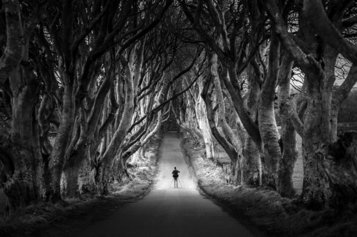 Природный тоннель из буковых деревьев в Северной Ирландии.