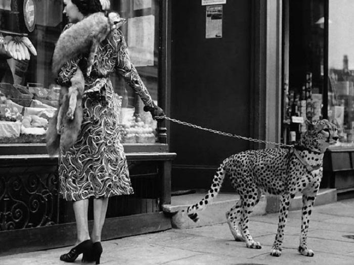 Американская актриса немого довоенного кино Филлис Гордон со своим гепардом на прогулке.