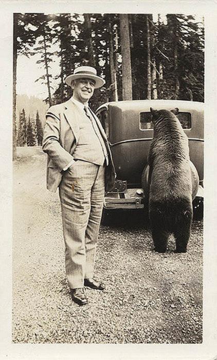 Машины толкают даже медведи!