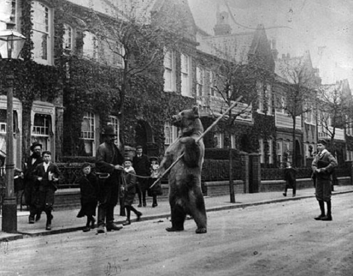 Медведь с палкой, разгуливающий по улицам города.