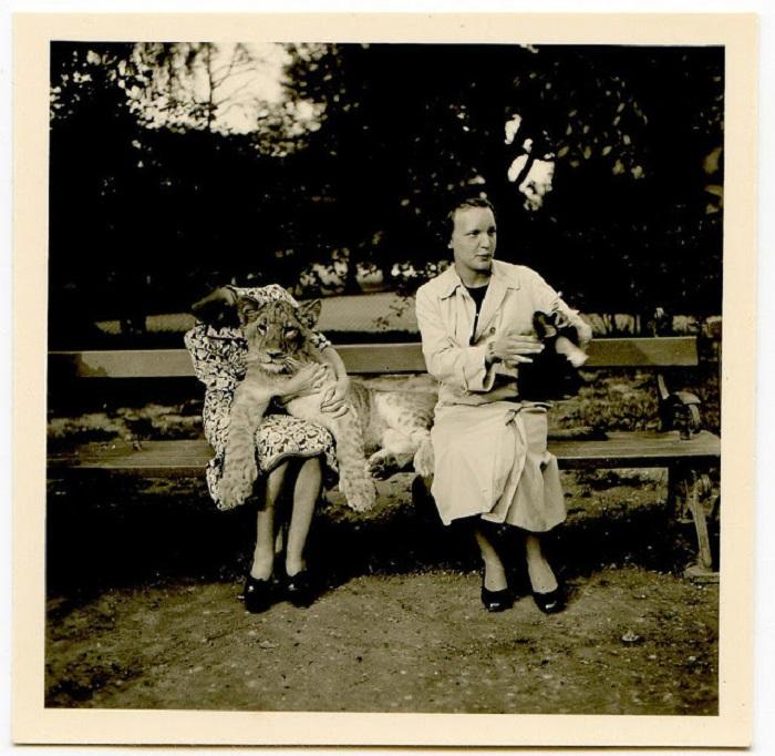 Девушки в парке с тигром и собакой.