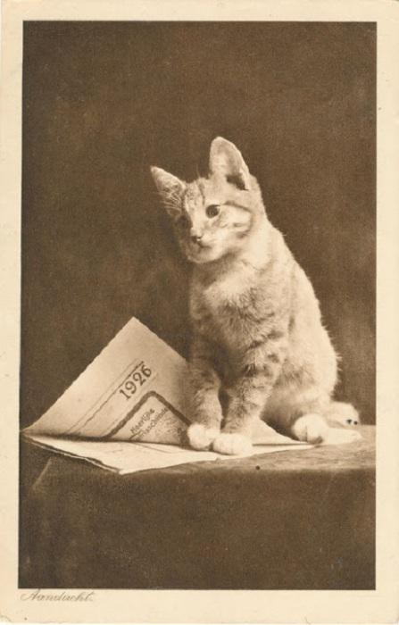 Кошка читает газету.
