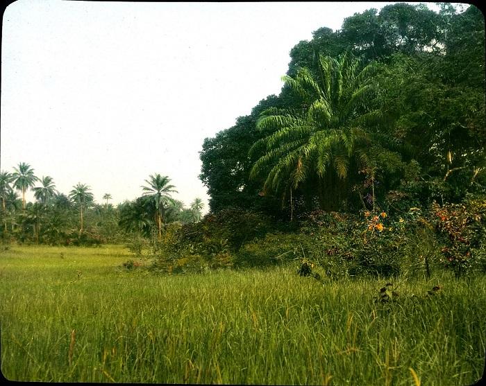 Тропические леса Африки населяет уже не одно поколение людей.