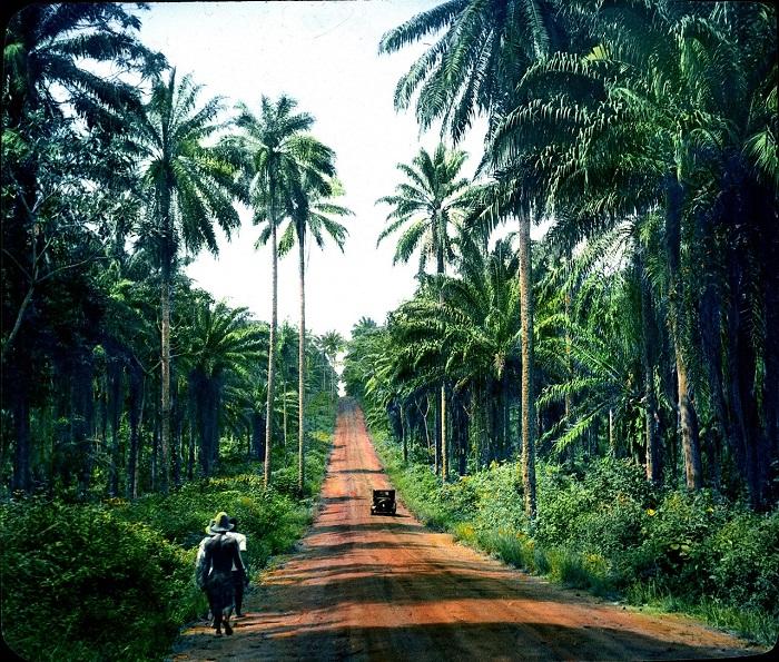 Экваториальные вечнозеленые леса.