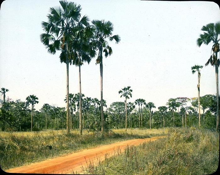 Редколесие тропических лесов.