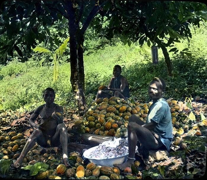 Западная Африка - основной экспортер какао-бобов.