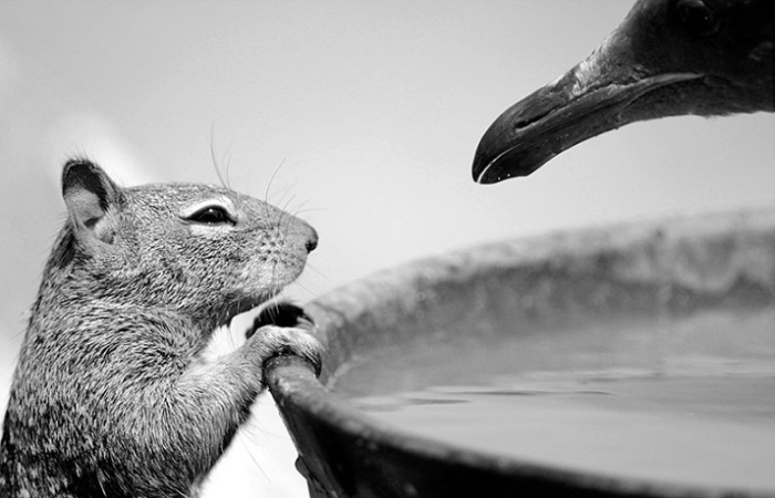 Невероятные фотографии животных.