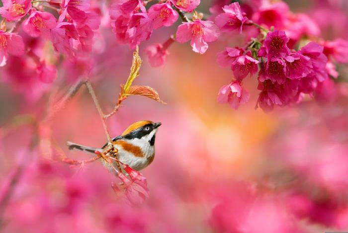 Фотограф: FuYi Chen.