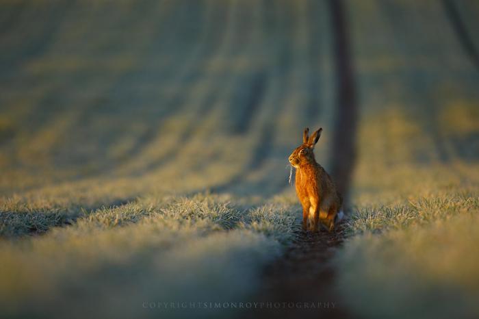 Фотограф: Саймон Рой (Simon Roy).