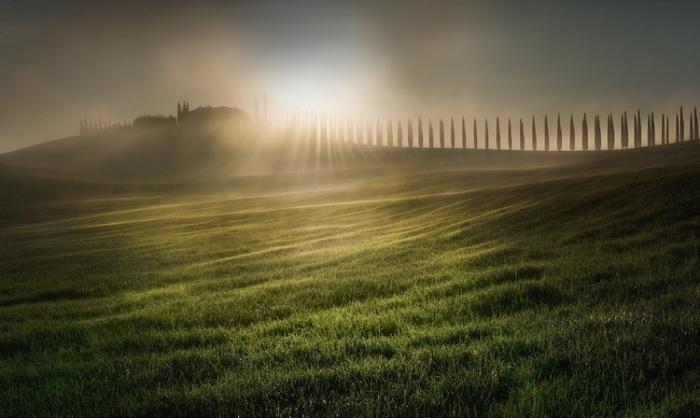 Победителем конкурса стал фотограф Веселин Атанасов (Veselin Atanasov) из Болгарии, запечатлевший весеннее утро в Тоскане (Италия.)
